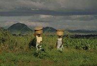 Camponesas no Continente Africano